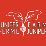 web-design-juniper-farm-featured